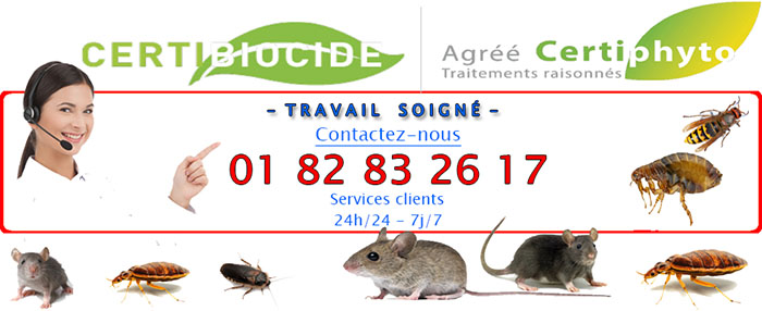 Insectes Marcoussis